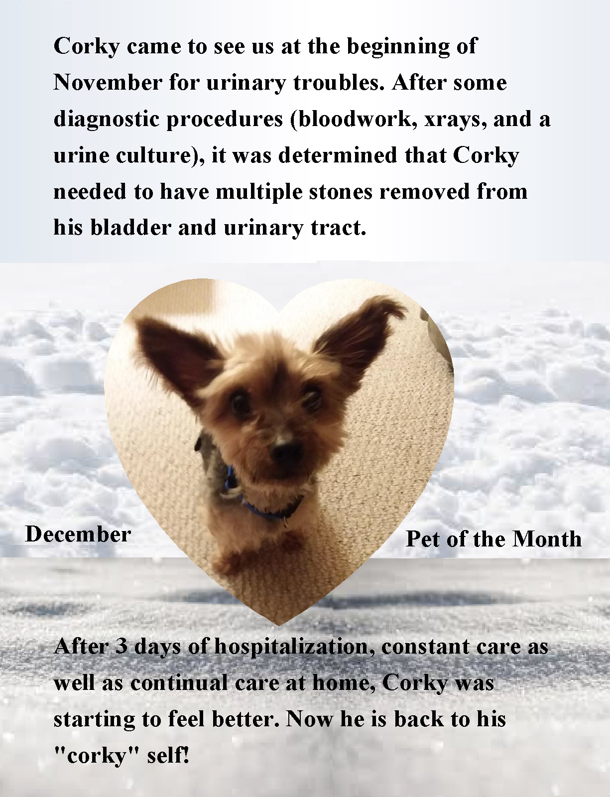 Dec Pet of the month